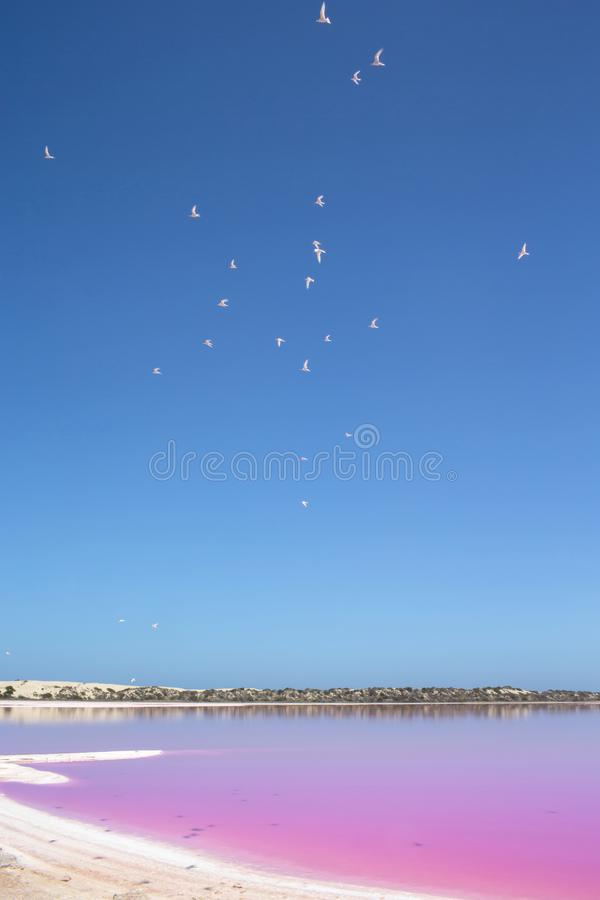 Pink lake Hut Lagoon at Port Gregory, Western Australia, Australia royalty free stock photo