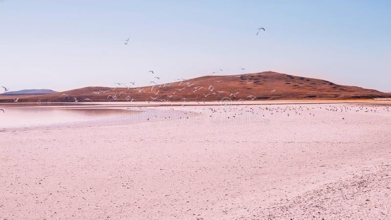 Pink lake stock photos