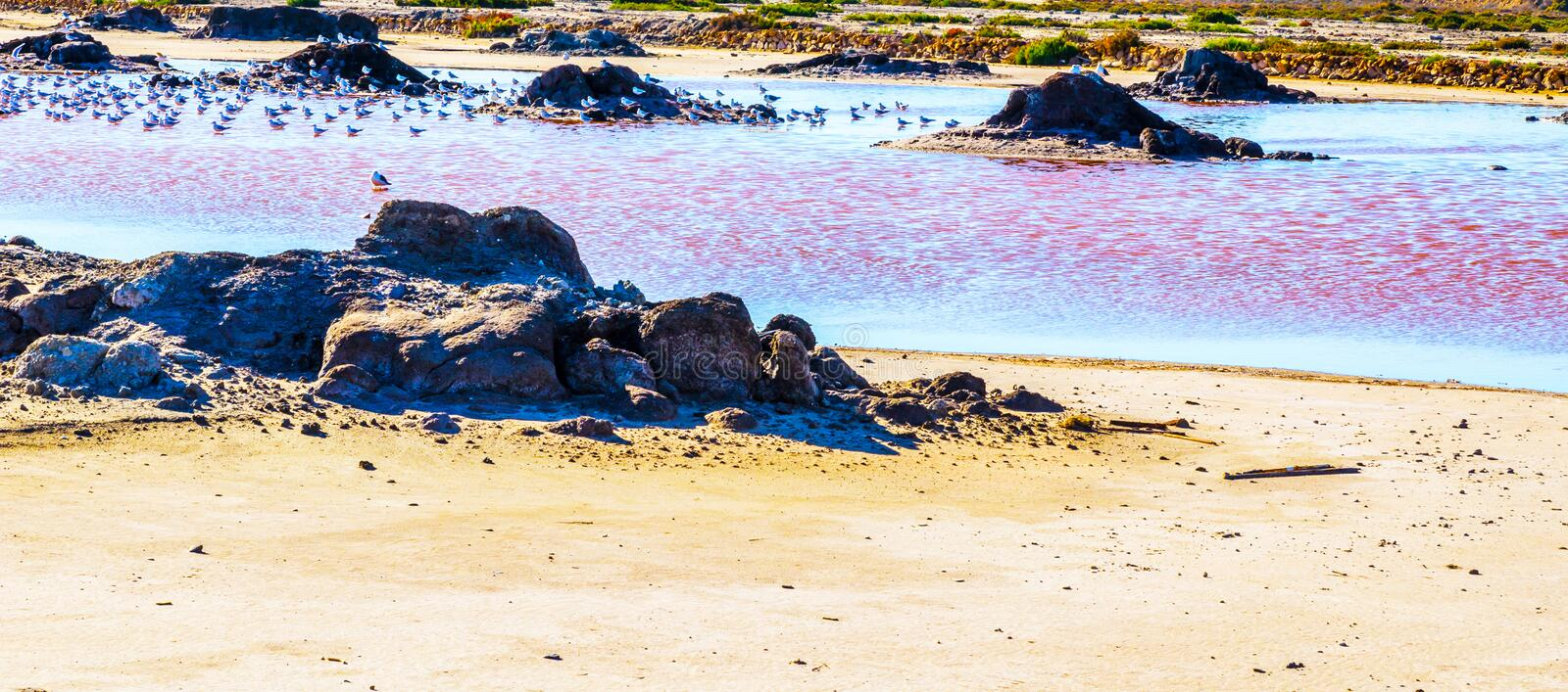 Pink lake in spain, unusual phenomenon, mineral influence on water. Rose river royalty free stock images