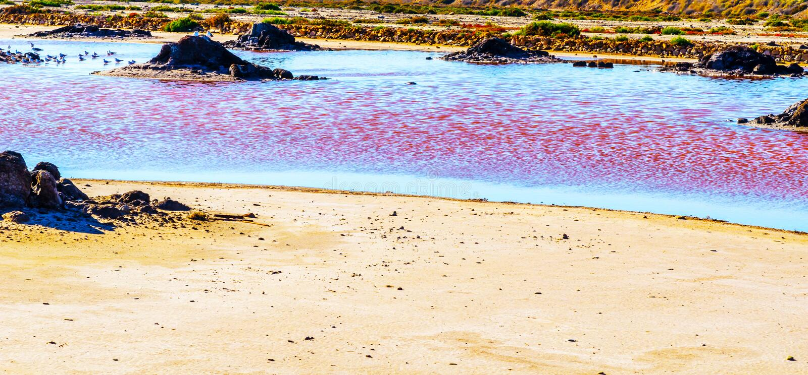 Pink lake in spain, unusual phenomenon, mineral influence on water. Rose river stock photo