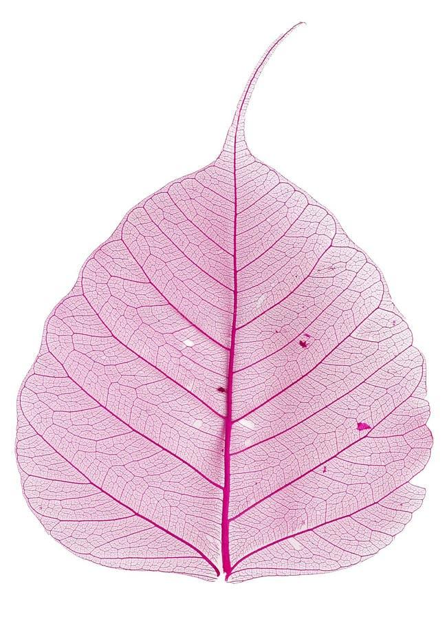 Free Pink Leaf Stock Images - 4165944