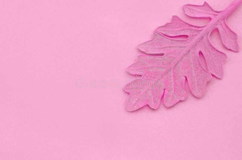 Pink leaf on paper background. Fashion minimal pop art style. stock photos