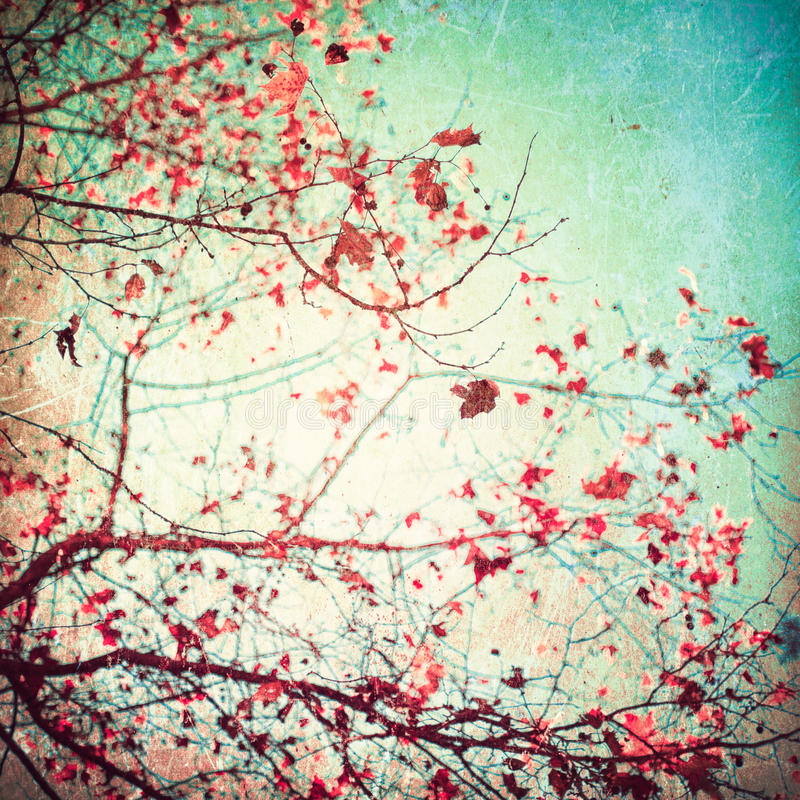 Pink leafs on blue sky. Vintage and textured stock photography