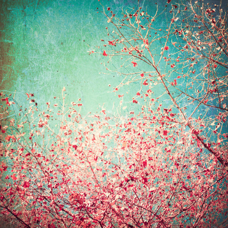 Pink leafs on blue sky. Vintage and textured stock image