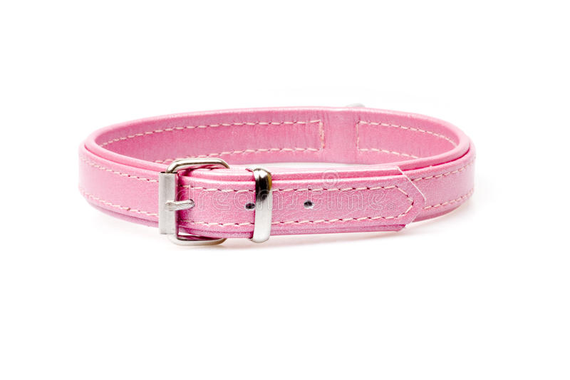 Download Pink leather collar stock photo. Image of equipment, rule - 25567848
