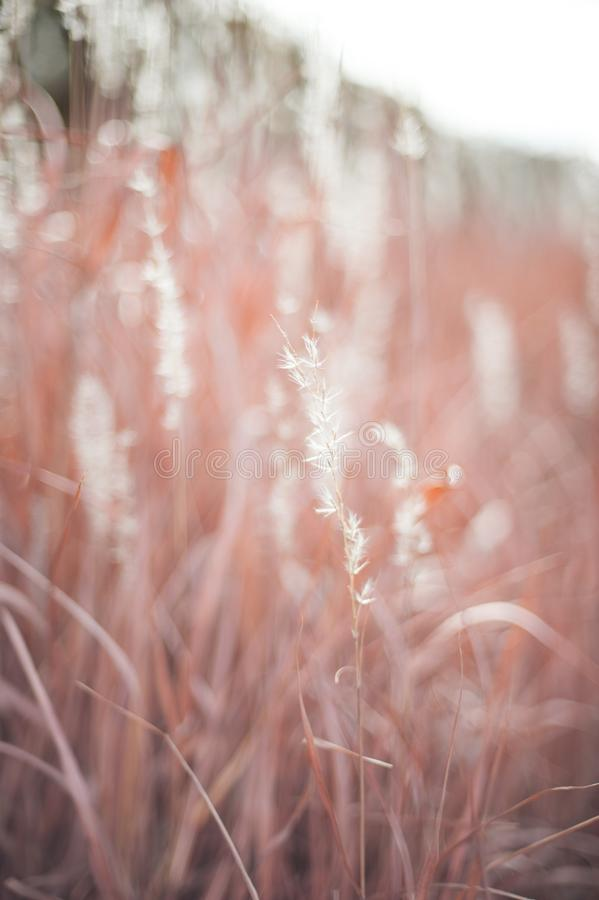 Pink, Light, Sunlight, Close Up stock images