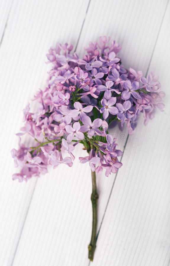 Pink lilac flower. On a wooden table royalty free stock images