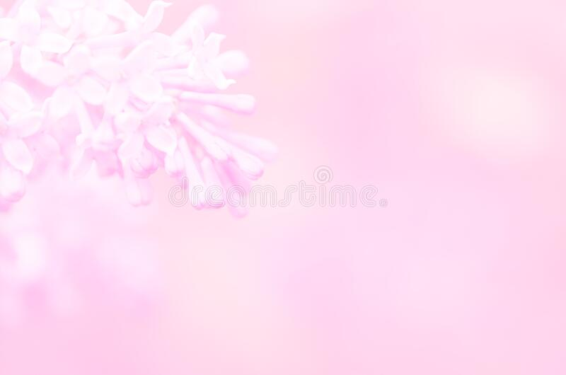 Pink lilac flowers spring blossom background. Image royalty free stock photography