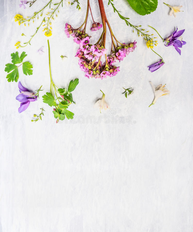 Pink, lilac and yellow spring or summer garden flowers and plants on light wooden background. Top view, border stock photo