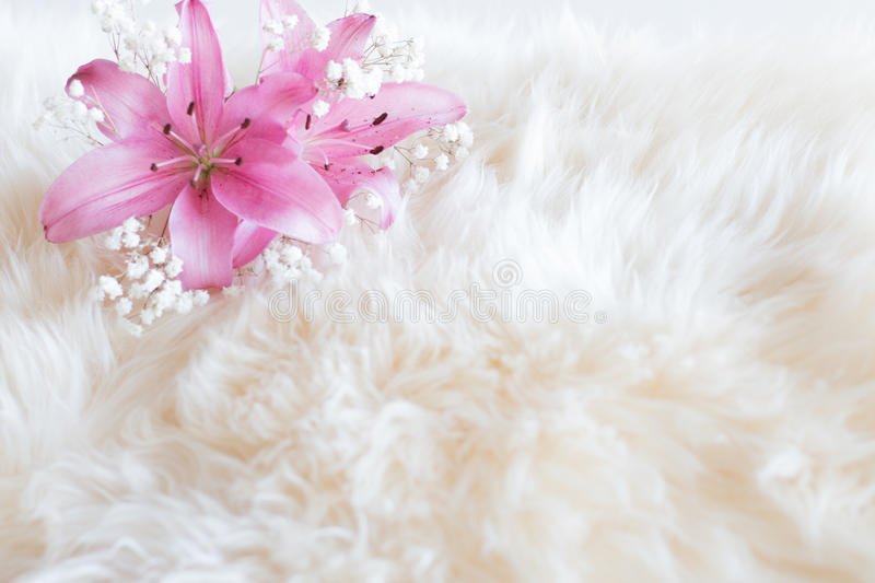 Pink lilies and gypsophila on fur backgroud royalty free stock photo