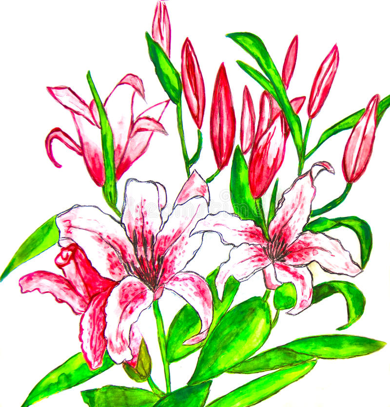 Pink lilies, painting royalty free illustration