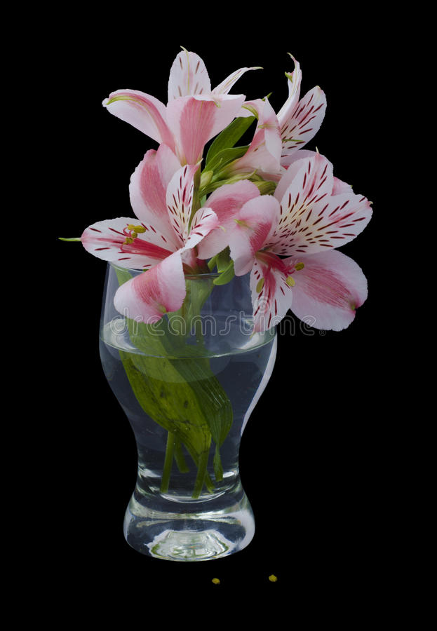 Pink lily bouquet in transparent glass on black background stock image