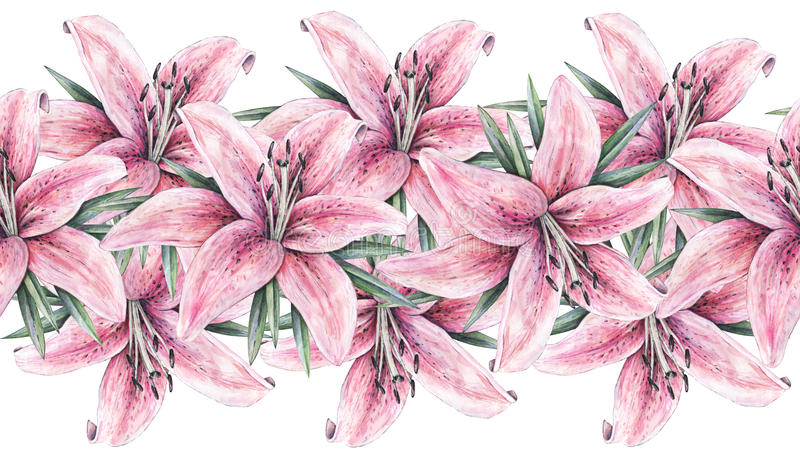 Pink lily flowers isolated on white background. Watercolor handwork illustration. Seamless pattern frame border with lilies royalty free illustration