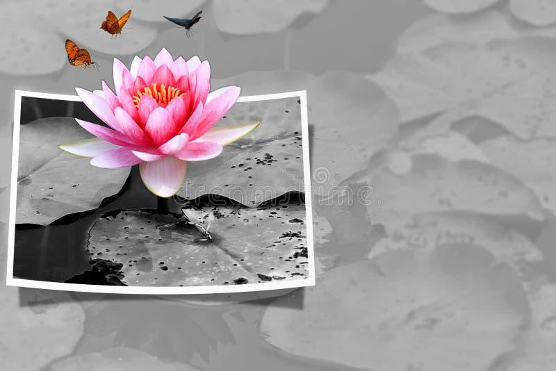 Download Pink lotus stock photo. Image of buddhist, blossom, bangkok - 23229152