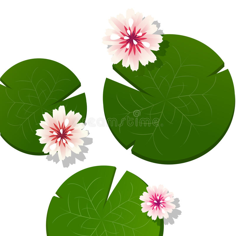 Download Pink lotus stock vector. Illustration of lotus, selection - 24804942
