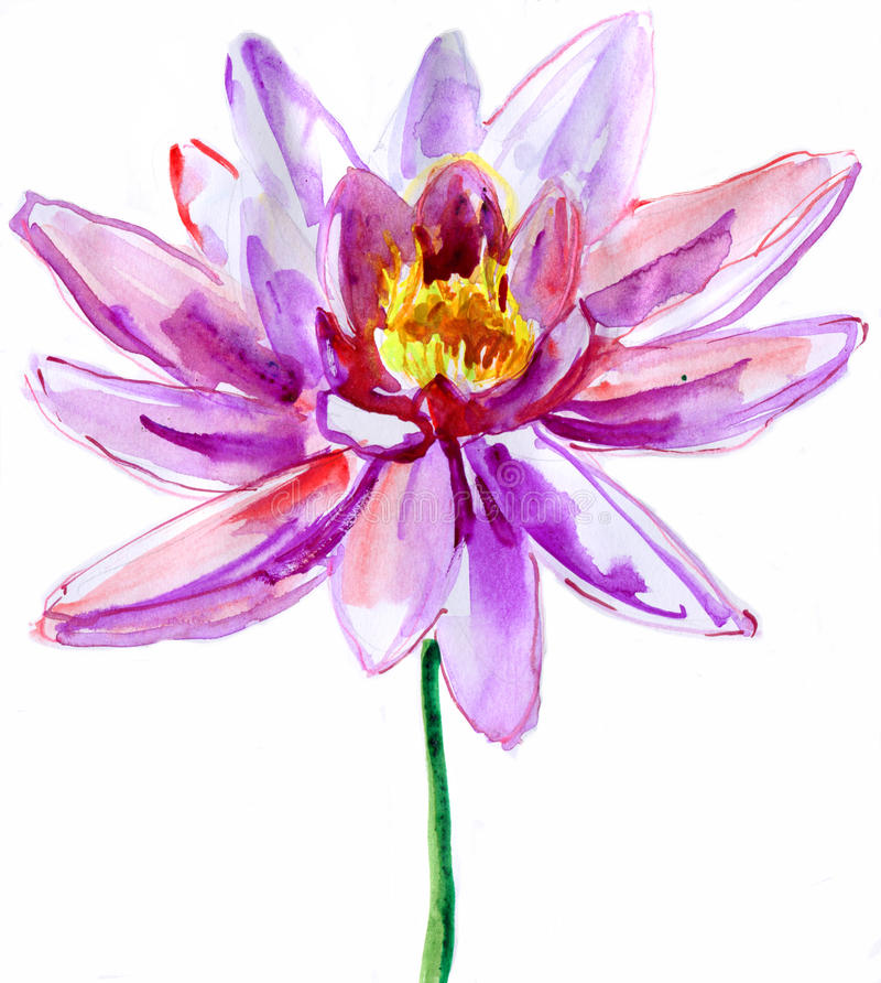 Download Pink Lotus Stock Illustration Of Watercolor