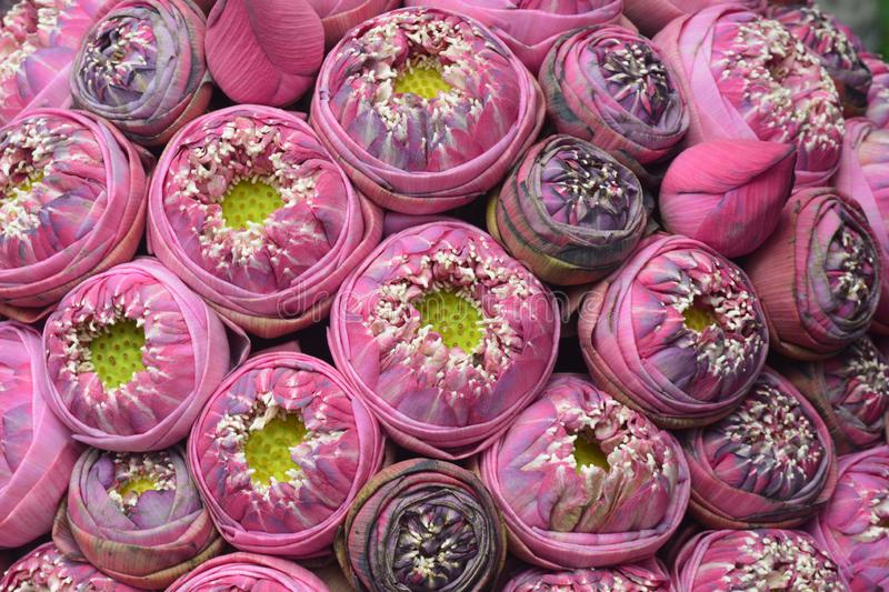 Pink lotus design on the wall. Note select focus with shallow depth of field stock photos