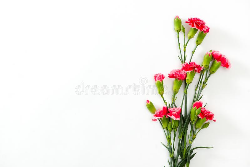 Pink lovely flowers on white background. Festive greeting card. Pink lovely flowers on white background. Festive greeting royalty free stock photo