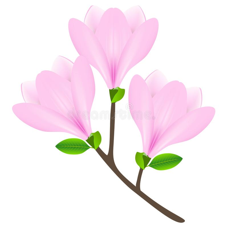 Pink magnolia flowers on a branch isolated on white background. stock illustration