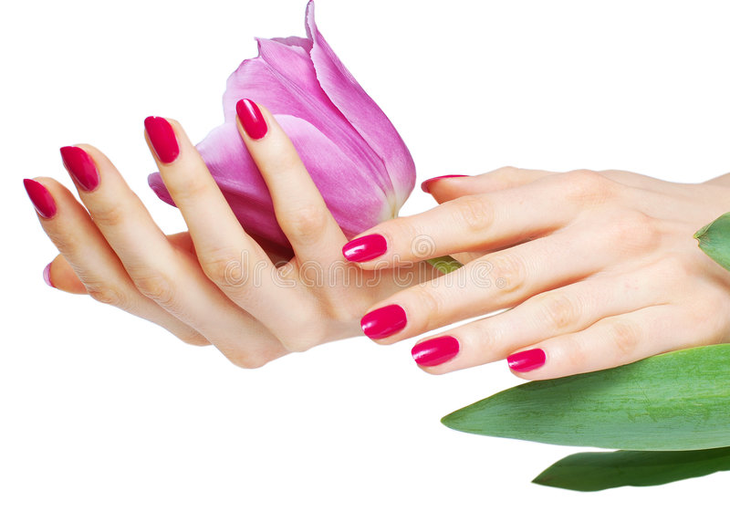Pink manicure and tulip stock images