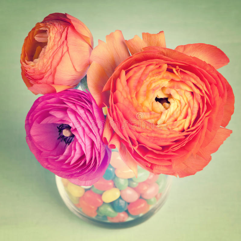 Pink and orange colorful ranunculus in a vase. Decorated by a sweets on vintage blue background stock photo