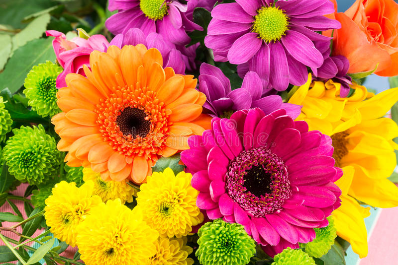 Pink and orange Transvaal daisy`s in bunch of flowers. Pink and orange Transvaal daisy`s mixed with fresh vibrant brightly coloured florist flowers royalty free stock photos