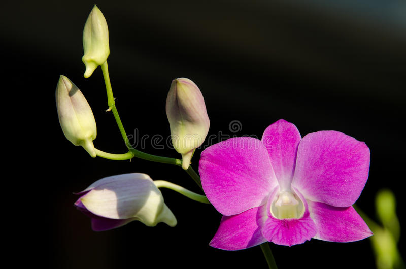 Download Pink Orchid stock image. Image of fresh, blossom, djm4 - 19385179