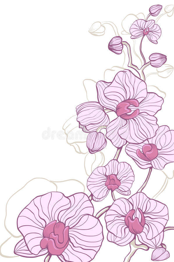 Download Pink orchid stock vector. Image of flower, cartoon, pink - 26624247