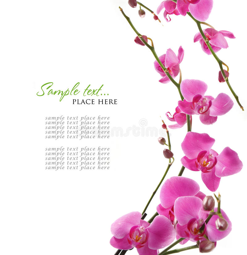Pink orchid background stock image