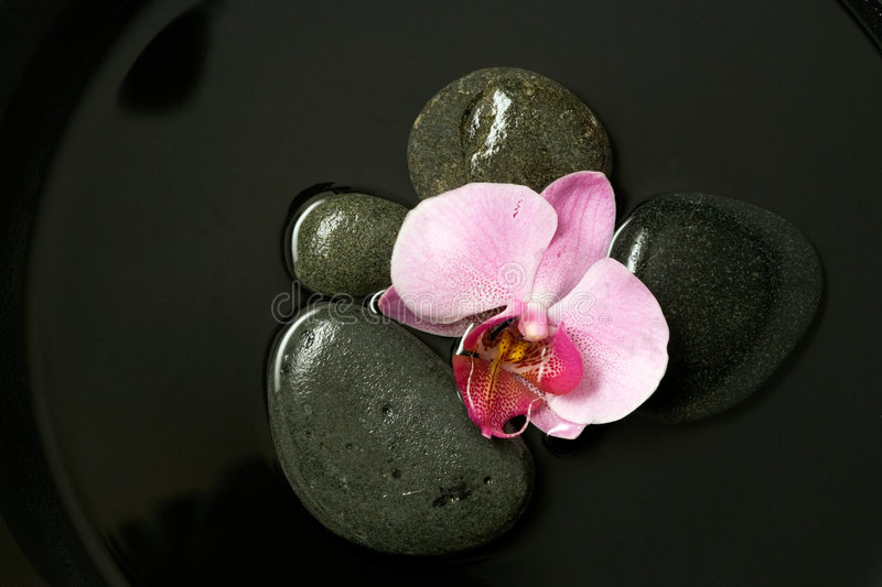 Download Pink Orchid On Black Stones Royalty Free Stock Photography - Image: 4268117