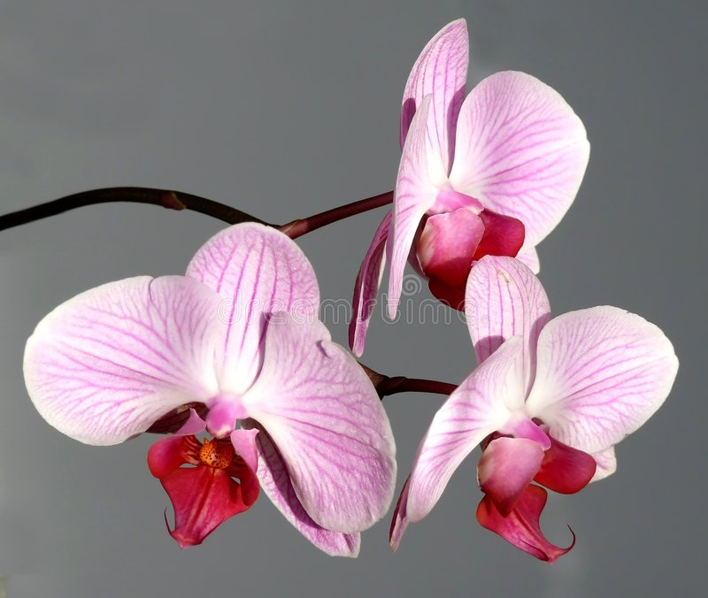 Download Pink orchid bouquet stock image. Image of foliage, backgrounds - 4202585