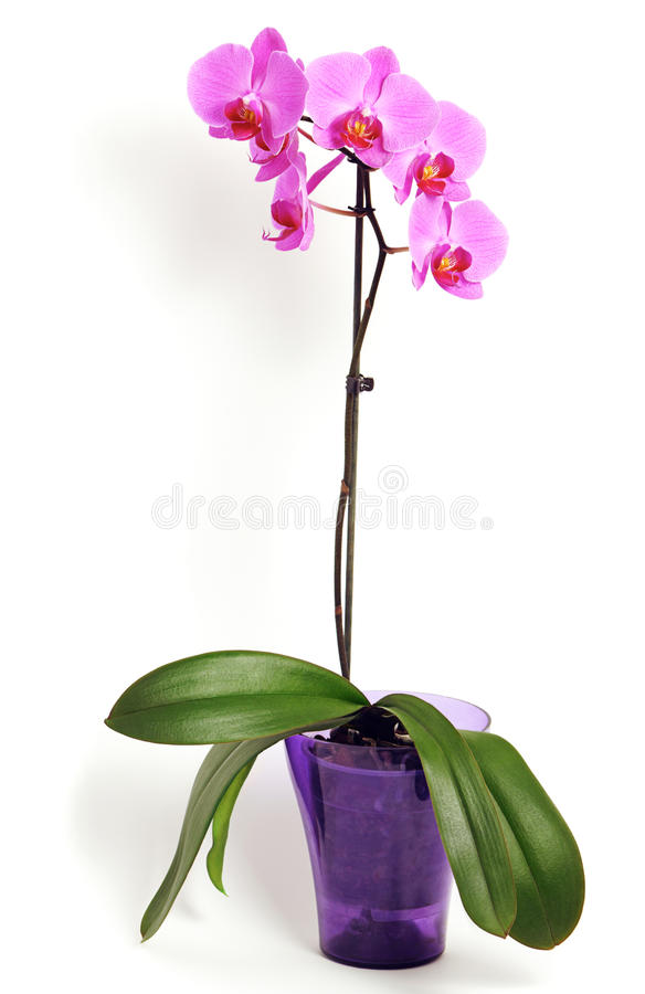 Download Pink orchid flower stock image. Image of bunch, beauty - 21076335