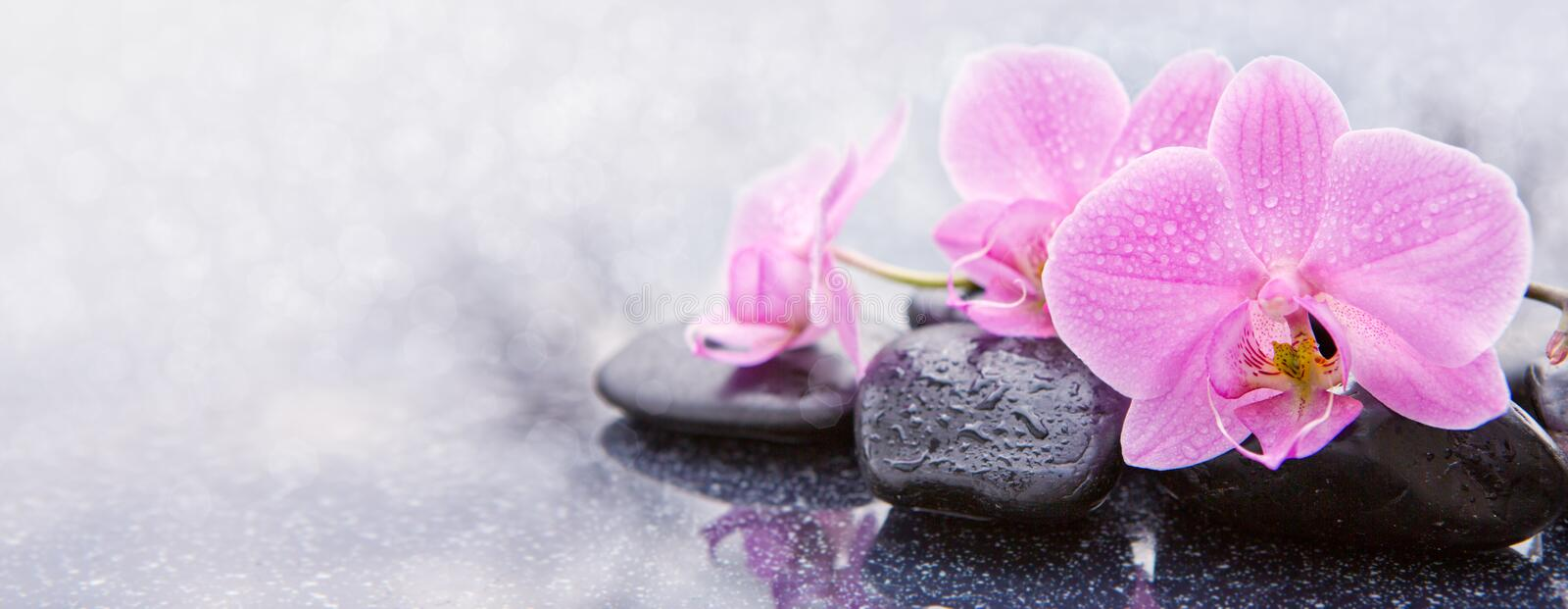 Pink orchid and spa stones . Pink orchid flower and stone with water drops on black background stock images