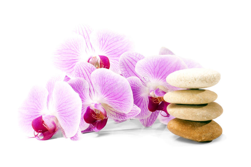 Pink orchid flower and stones. stock photography