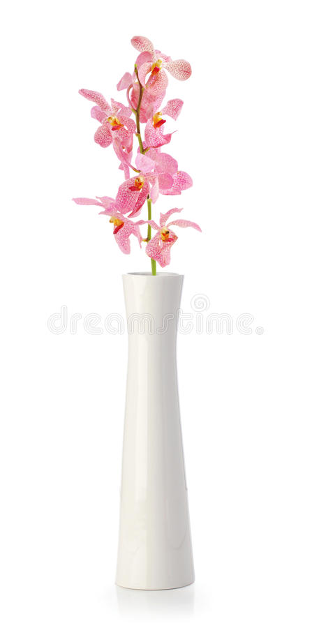Pink Orchid flower in white vase royalty free stock photo