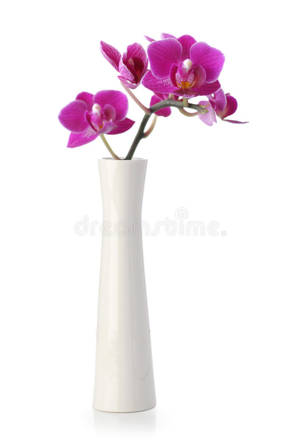 Download Pink Orchid Flower In White Vase Stock Image - Image: 24633109