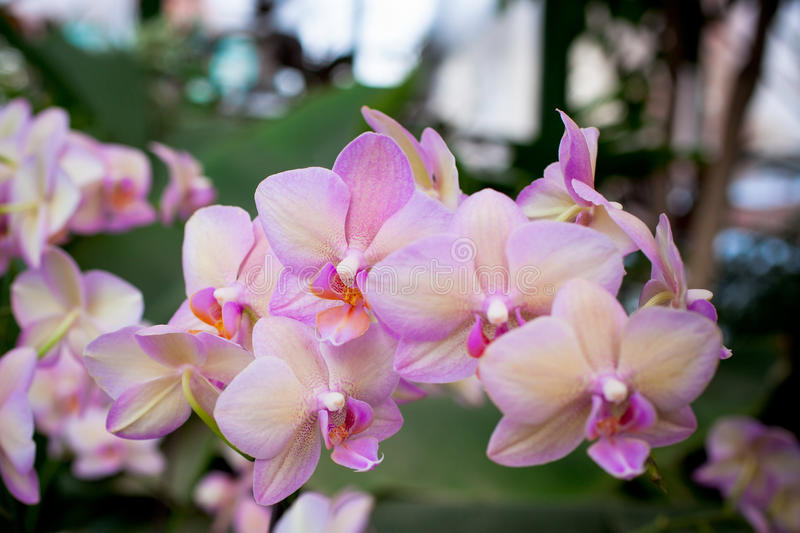 Download Pink Orchid Flowers stock photo. Image of growth, bright - 38754564