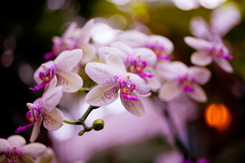 Download Pink Orchid Flowers On Leaves Background Stock Image - Image: 38789377
