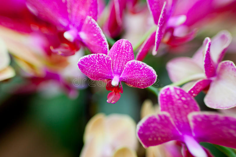 Download Pink Orchid Flowers On Leaves Background Stock Image - Image: 38789477