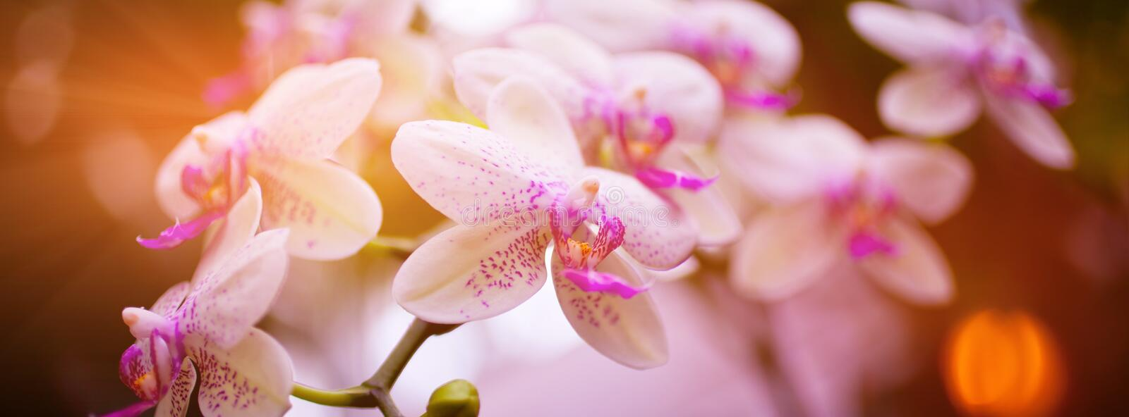 Pink Orchid Flowers on Leaves Background stock photography