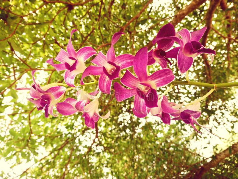 Pink orchid Under the big green tree royalty free stock images