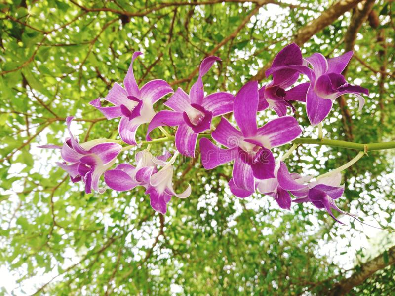 Pink orchid Under the big green tree royalty free stock photos