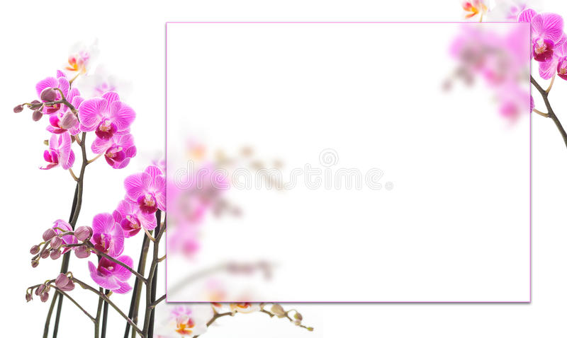 Pink orchids background stock photo