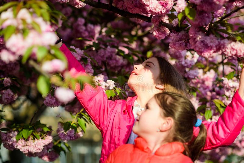 Pink is our favorite. Children enjoy spring garden. Sakura garden. Sisters walk park sakura trees. Kids pink flowers of. Sakura tree background. Flowers soft royalty free stock photo
