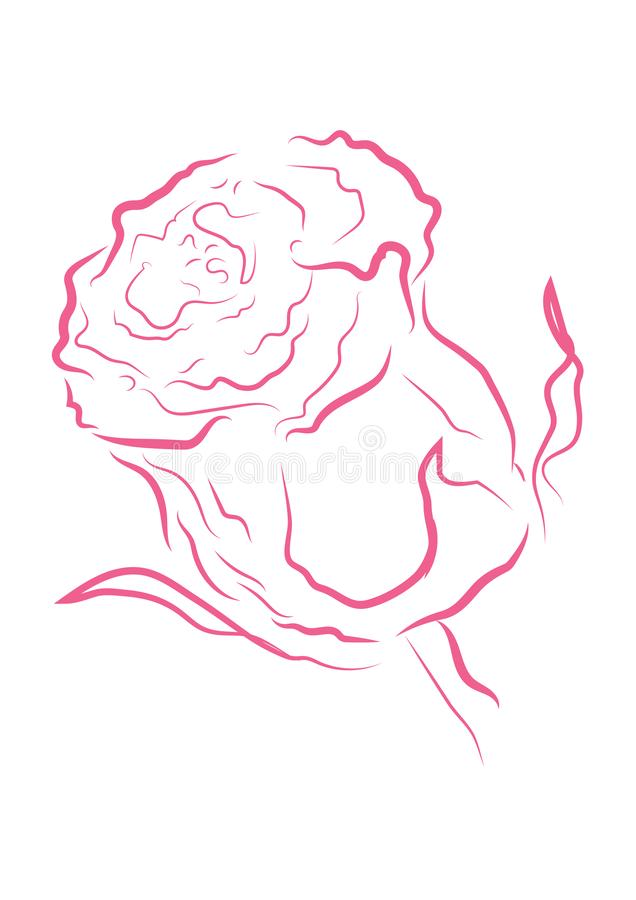 Pink outline rose with different stroke effects. Pink outline rose with different stroke effects and shapes vector illustration