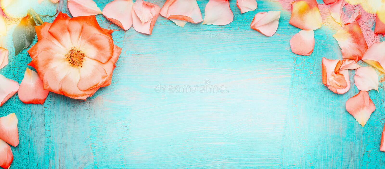 Pink pale rose petals border with bokeh on blue turquoise background, top view . Love , romantic and Valentines day. Concept royalty free stock image