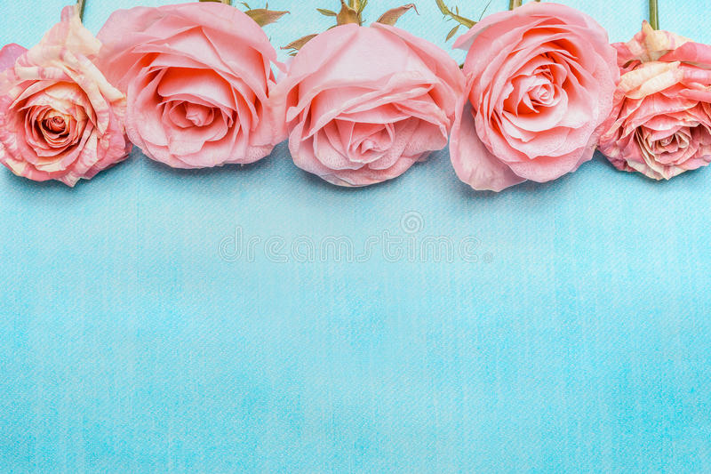 Pink pale roses border on blue background royalty free stock photography