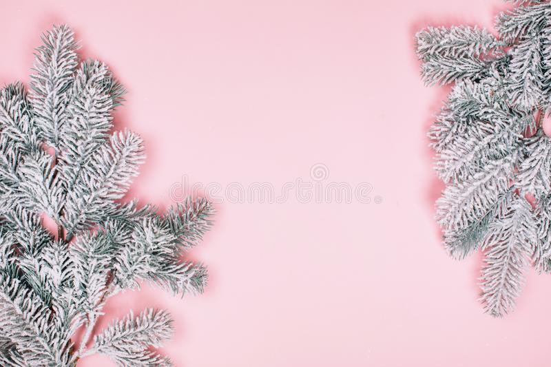 Pink pastel minimalistic background with snowy branck of fir tree. royalty free stock images