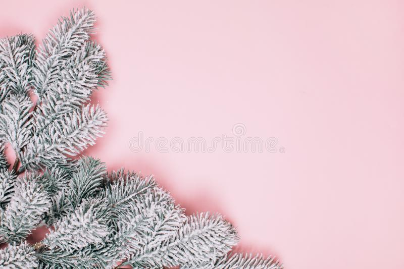 Pink pastel minimalistic background with snowy branck of fir tree. stock photo