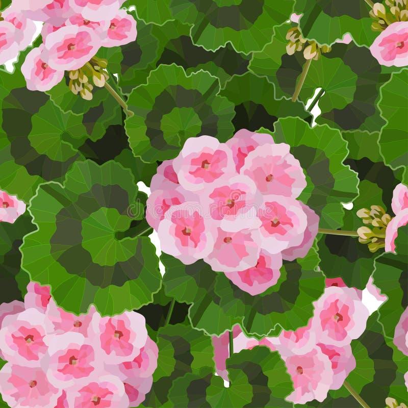 Pink pelargonium flowers vector illustration. Garden or interior decoration. Salmon pink pelargonium flowers vector illustration. Garden or interior decoration vector illustration